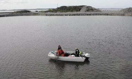 150 trapped eels rescued at the Port of Gothenburg