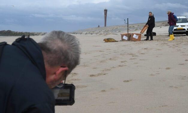 Het gaat goed met zeehondenpopulatie haven Rotterdam en 'Wild Life of Europe