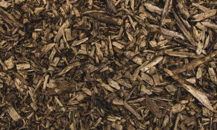 Kabinet kiest voor verantwoorde inzet biogrondstoffen
