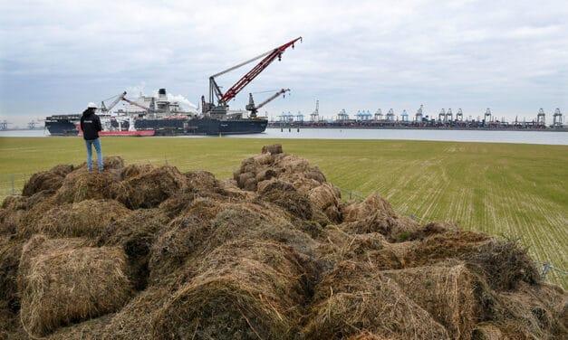 Havenbedrijf verrijkt Maasvlakte met zelf gemaakt bokashi