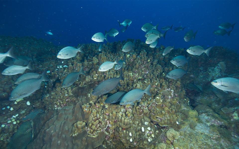 Streven naar stillere  schepen, ten bate van  het onderwaterleven